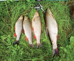 Прикормка для зимней рыбалки леща своими руками