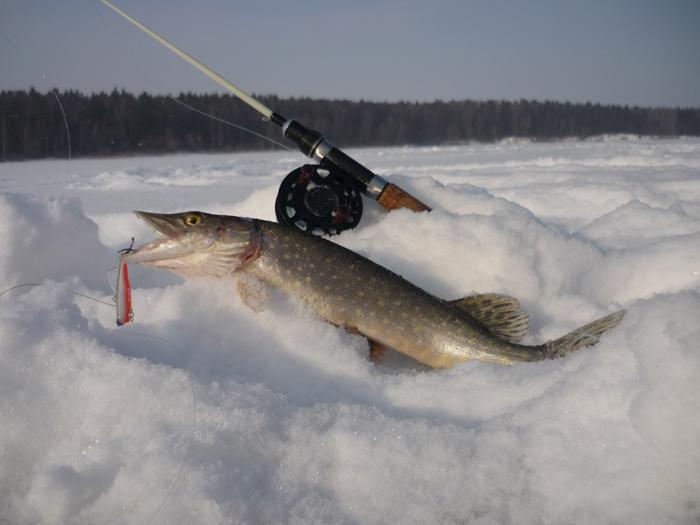 За щукой на рыбалку советы